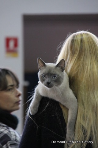 Diamond Life's Thai Cattery, Exposition St Aygulf du 27 & 28 Nov 114.jpg